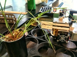 Measuring photosynthesis of Sporobolus pellucidus using a Licor-6400.